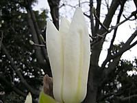 P50_20120331_074446