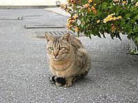 P50_20121111_084118