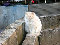 P50_20130101_160358